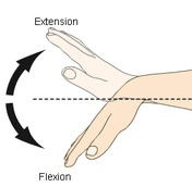 extension-flexion