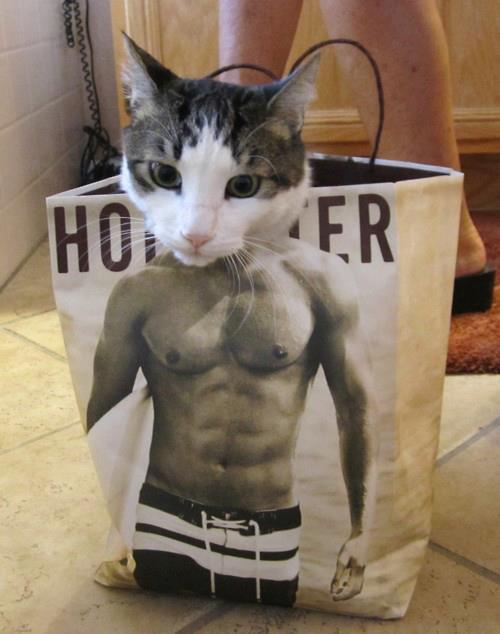 anabolic cat